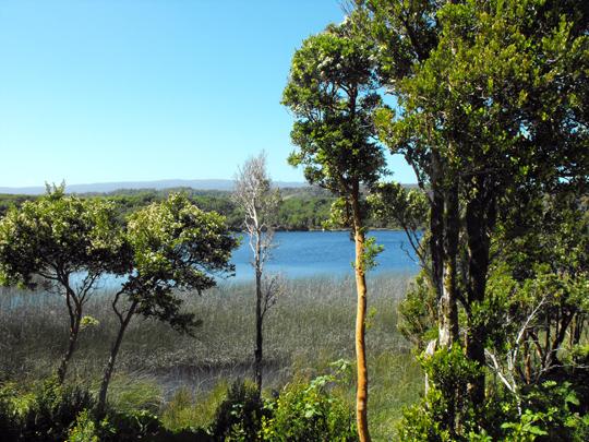 Il lago di Cucao. L'arrayan.