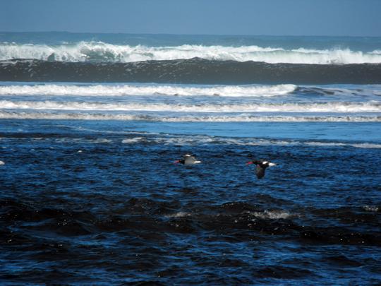 Mare-oceano con due ostrichieri.
