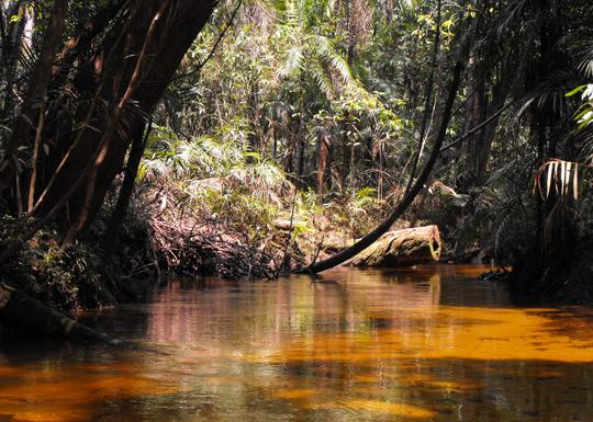 Le acque chiare che abbiamo risalito verso l'interno del Rio Negro.