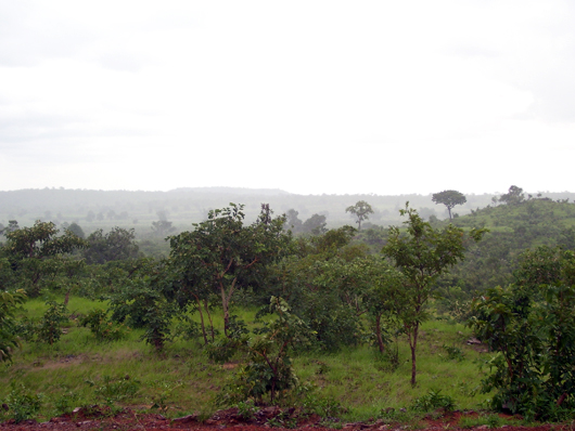 La brousse dall'unica piccola altura verso Pala. Piove.