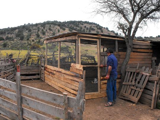 Don Carlos con il suo gallinero integrato al porcile.