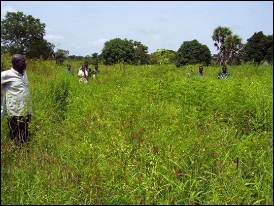Il luogo dove verrà costruito il granaio di Yamba Malloum, e l'omonimo gruppo di contadini.