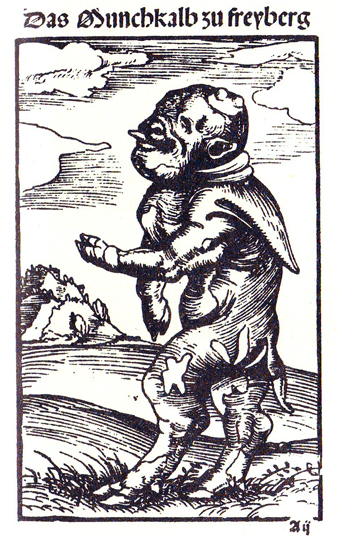 Il vitello-monaco di Freiberg, 1523.