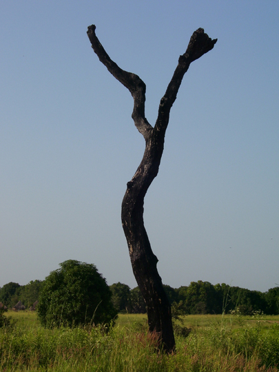 La foresta che non cresce: l'albero carbonizzato piantato in mezzo al campo è una nike che indica la sconfitta della natura in favore di un raccolto che cresce indisturbato dall'ombra.