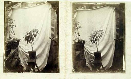 1878, Darwin experiment plant motion.