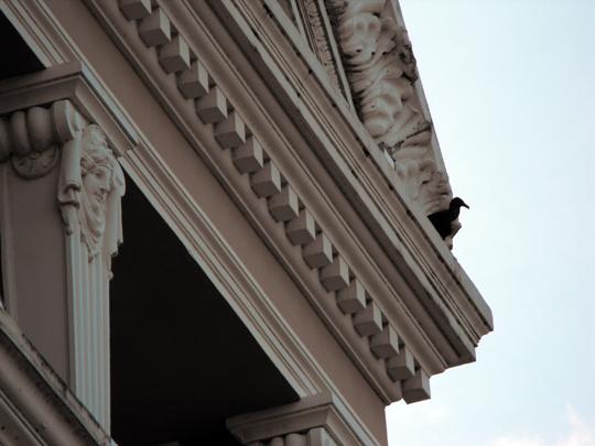 Un avvoltoio appropriatamente sopra un teatro. Questo il sorprendente e remoto teatro lirico di Manaus, amato da Fitzcarraldo.